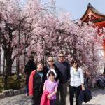 המלצות מטיילים ביפן